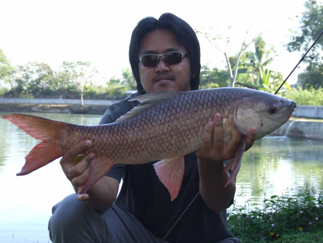 Dreamlake_Fishing_Thailand_0.442