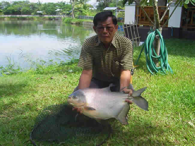 Dreamlake_Fishing_Thailand_0.461