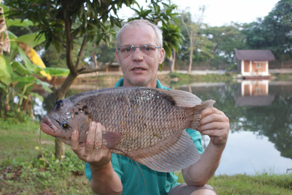 Dreamlake_Fishing_Thailand_Giant-Gourami
