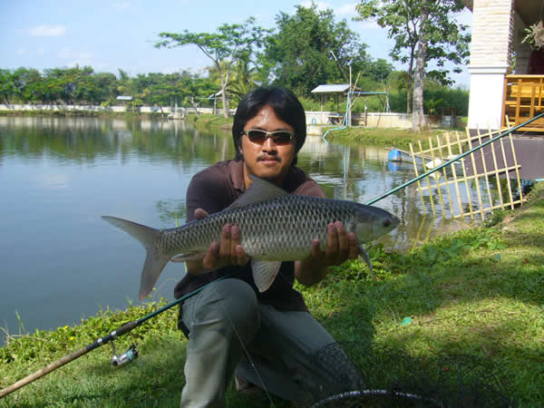 Dreamlake_Fishing_Thailand_mudcarp