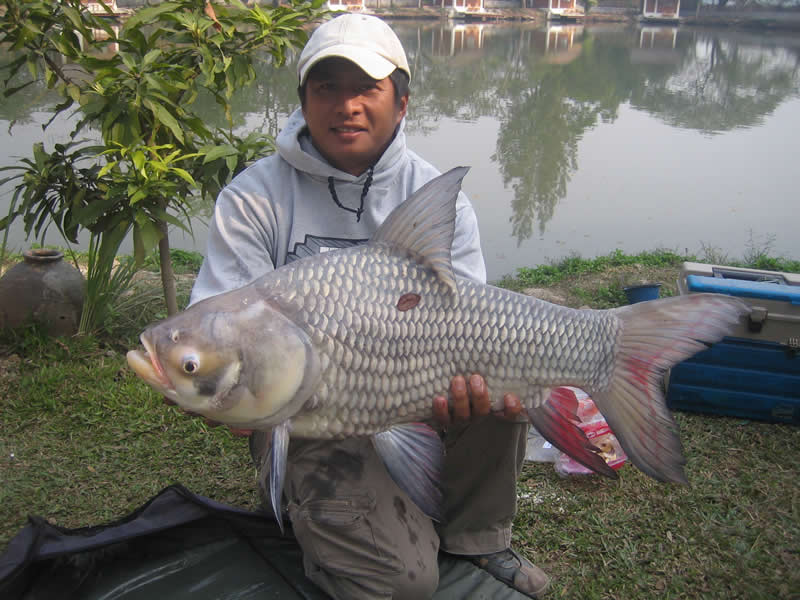 Dreamlake_Fishing_Thailand_siamcarp