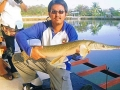 Dreamlake_Fishing_Thailand_allig