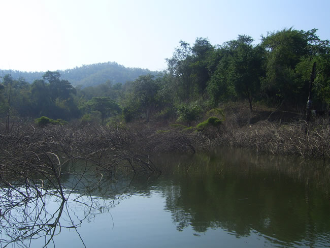 scenery_snakehead_fishing_chiang_mai