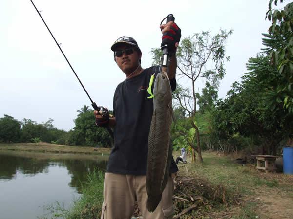 snakehead_fishing_chiang_mai_41
