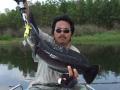 snakehead_fishing_chiang_mai_11