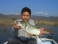 snakehead_fishing_chiang_mai_16