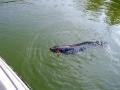 snakehead_fishing_chiang_mai_18