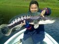 snakehead_fishing_chiang_mai_43