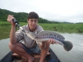 snakehead_fishing_chiang_mai_65