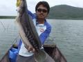 snakehead_fishing_chiang_mai_7