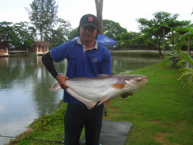 Giant_catfish_Fishing_Chiang_mai_Thailand_0.339