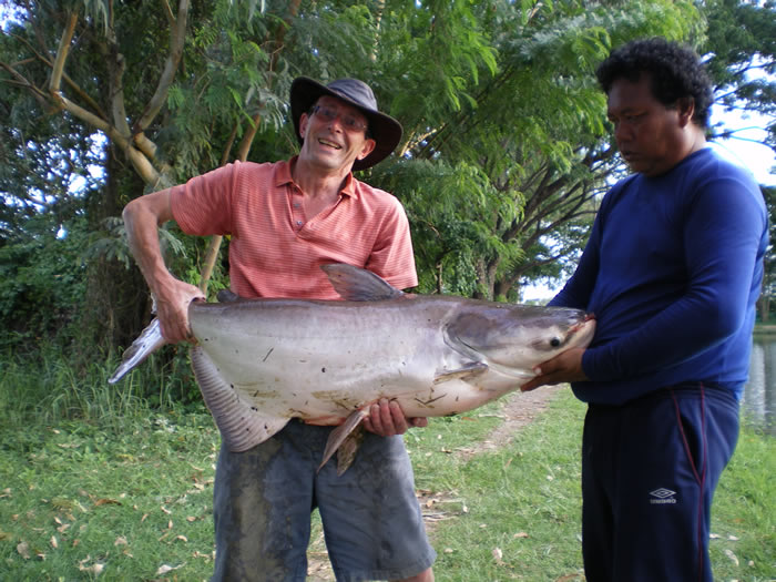 Giant_catfish_Fishing_Chiang_mai_Thailand_0.347