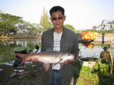 Giant_catfish_Fishing_Chiang_mai_Thailand_normal_picture-0059