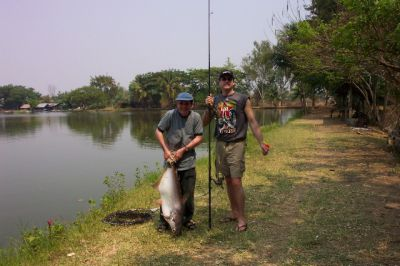 Giant_catfish_Fishing_Chiang_mai_Thailand_normal_picture-0082