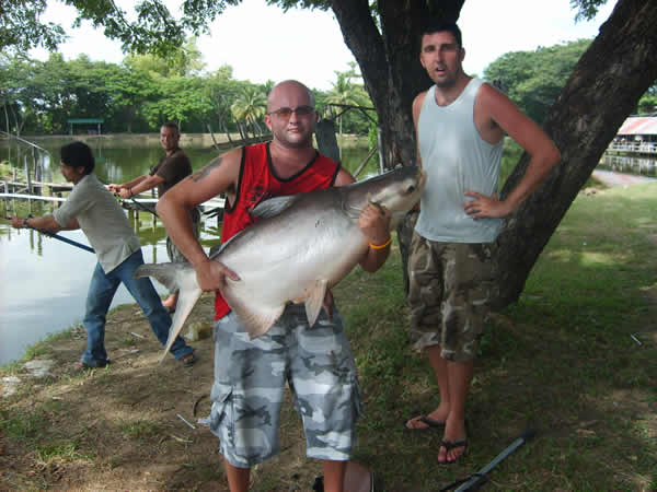 Giant_catfish_Fishing_Chiang_mai_Thailand_s5000136