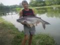 Giant_catfish_Fishing_Chiang_mai_Thailand_0.448