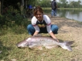 Giant_catfish_Fishing_Chiang_mai_Thailand_normal_picture-0017