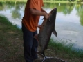 Giant_catfish_Fishing_Chiang_mai_Thailand_normal_picture-0035