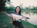 Giant_catfish_Fishing_Chiang_mai_Thailand_normal_picture-0056