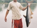 Giant_catfish_Fishing_Chiang_mai_Thailand_normal_picture-0142