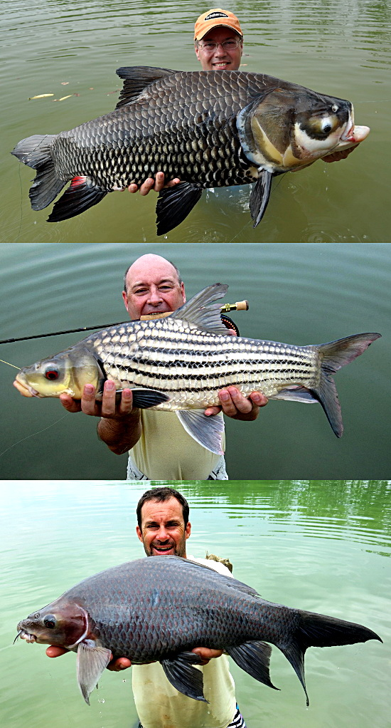 3 days 2 nights carp fishing megafishingthailand for Upcountry fly fishing