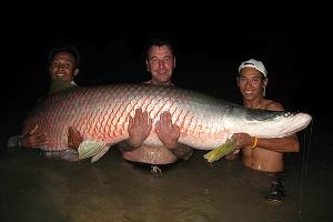 Photo of Arapaima fishing in Thailand