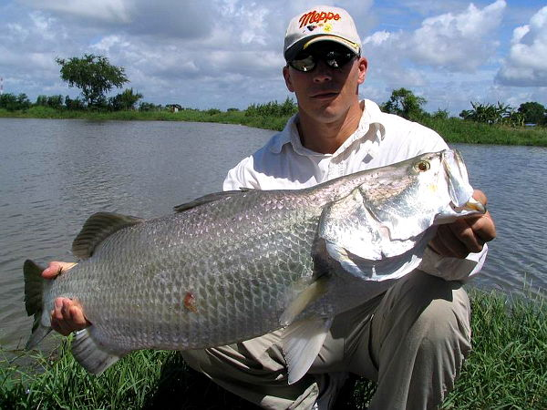 Image showing Barramundi caught from Thailand fishing lake in Bangkok