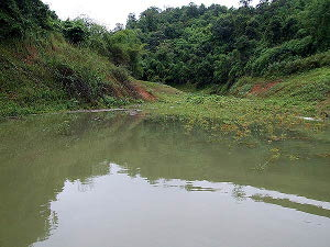 Photo of Giant snakehead territory habitat