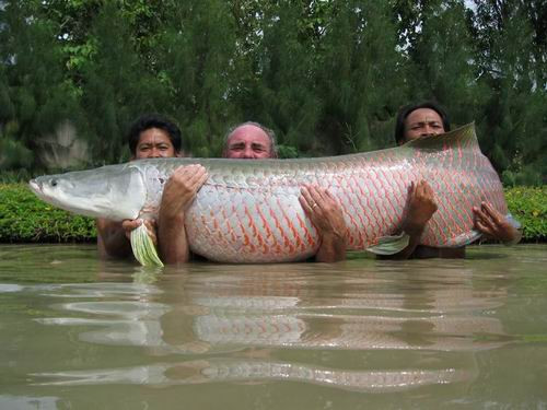 Photo of Arapaima caught fishing in Thailand at the monster predator lake on a Mega Fishing Thailand guided fishing trip