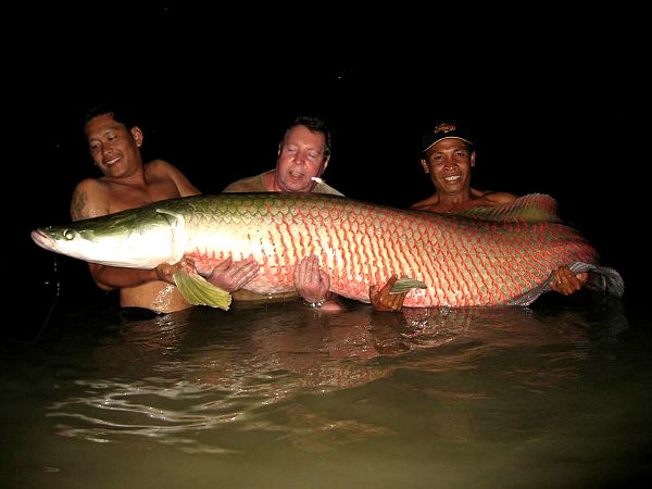 Image showing a monster giant Arapaima caught fishing in Thailand at Predator lake near Bangkok