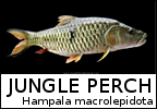 jungle_perch