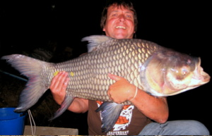 iant Siamese carp Catlocarpio siamensis caught fishing in Thailand at Dreamlake Chiang mai