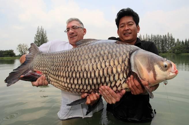 carp_fishing_thailand1