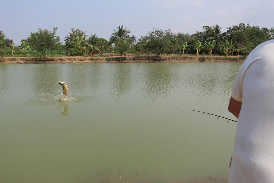 fly_fishing_thailand_arapaima2