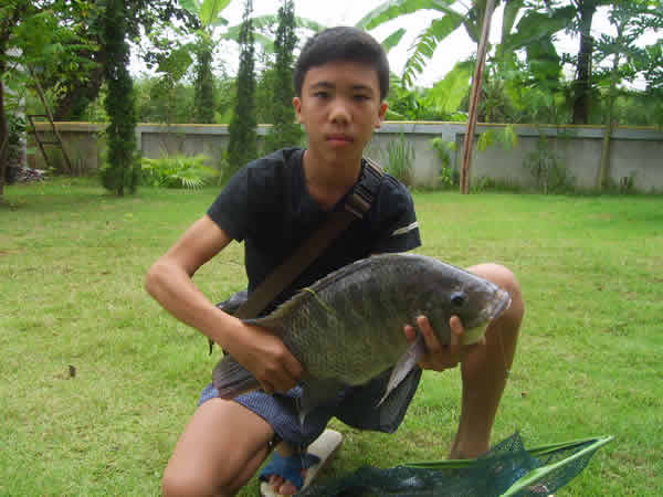 Dreamlake_Fishing_Thailand_tilapia
