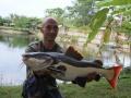 Dreamlake_Fishing_Thailand_redtail_fishing_chiang_mai_thailand