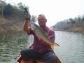 snakehead_fishing_chiang_mai_12