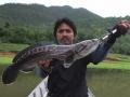 snakehead_fishing_chiang_mai_37