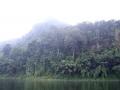 thailand_jungle