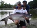 Giant_catfish_Fishing_Chiang_mai_Thailand_0.340